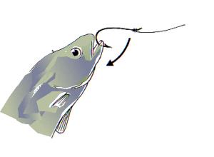 fische befreien